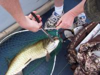 It tore a whopper of a hole in my net and almost flopped out on us.